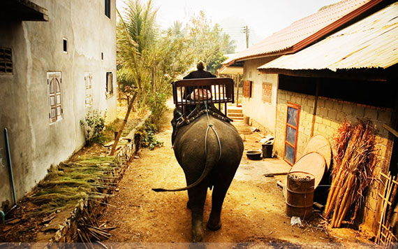 Luang Prabang – Elephant Village – City Tour